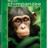 What DisneyNature's Chimpanzee Taught Me About Family
