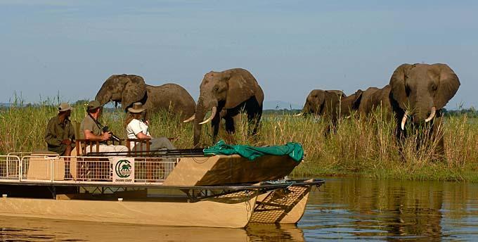 african safari elephants