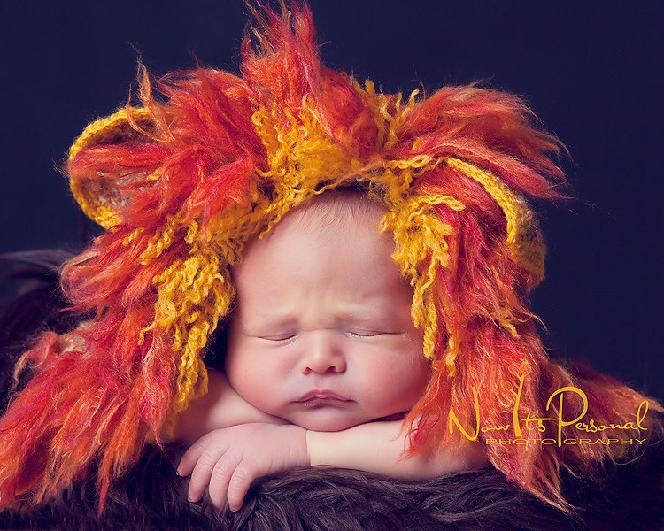 xander lion cub