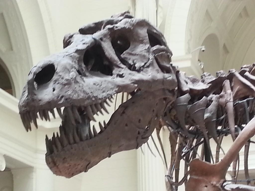 close up of trex skull