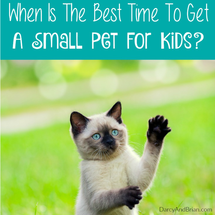 Wondering when to get your kids a small pet? Here are a few questions to ask yourself.