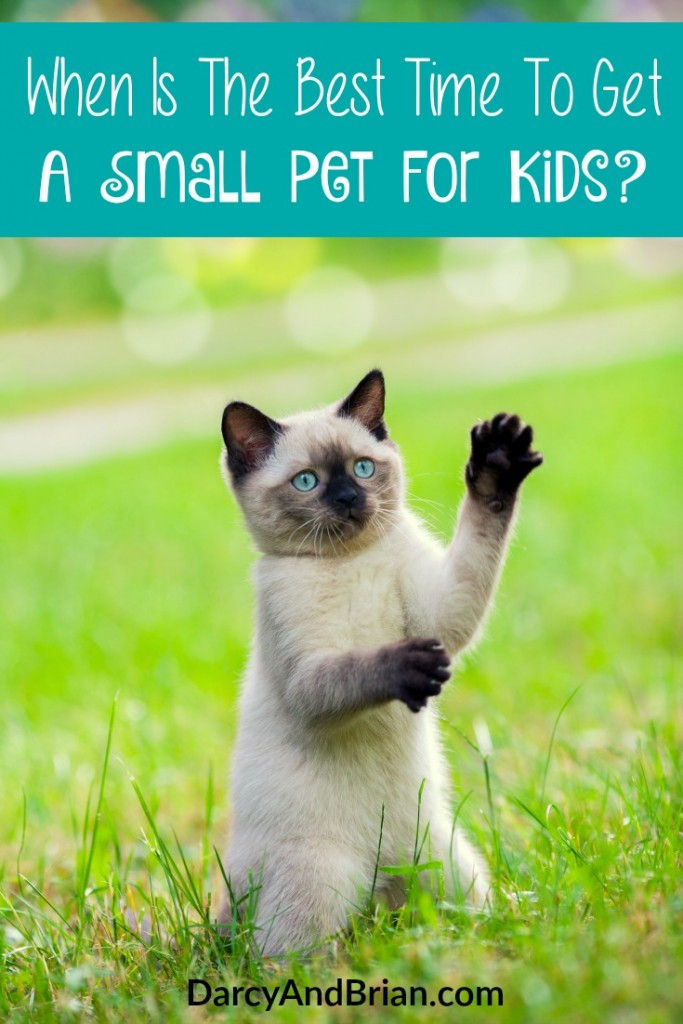 Check our answers to the question of When Is The Best Time To Get A Small Pet For Kids? We'll help you decide when it is a good idea to invest in a new family pet!