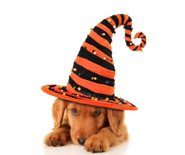 These Halloween Safety Tips for your pets will make sure your entire family can enjoy this spooky holiday without any safety scares along the way!
