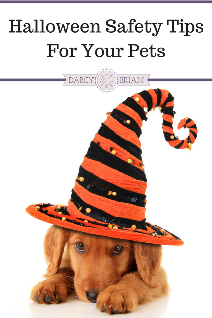 Thinking about taking your dog trick-or-treating or putting your cat in a pet costume? These Halloween Safety Tips for your pets will make sure your entire family can enjoy this spooky holiday without any safety scares along the way!