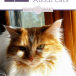 Number 5 & 7 are incredible! Check out these 12 Cool Facts About Cats and learn more before you introduce your family to these lovable pets! Your kids will have fun learning these cat facts.