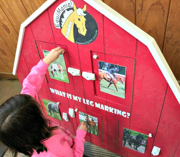Learning about horse markings at the Minnesota State Fair