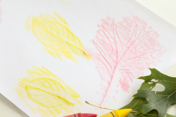 Leaf rubbings nature science for kids