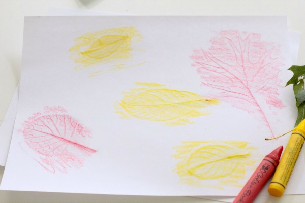 How to make leaf rubbings. Ideas for kids science activities.