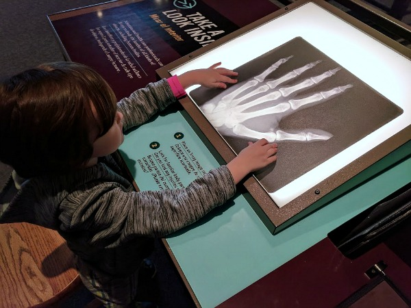 My son learning about xrays in hands on exhibit at Science Museum of Minnesota