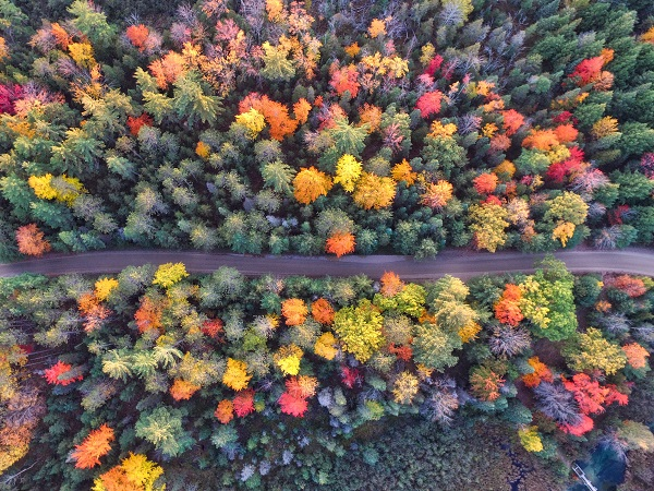 Overhead fall foliage. Image via Unsplash