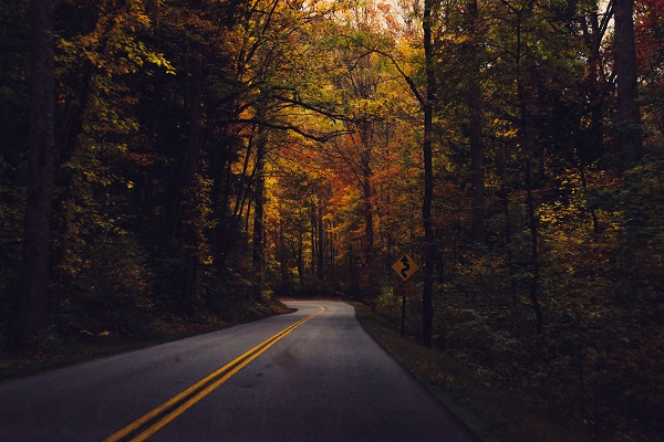Autumn leaves along the road. Image via Unsplash