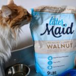 Long haired cat sniffing LitterMaid® Premium Walnut bag