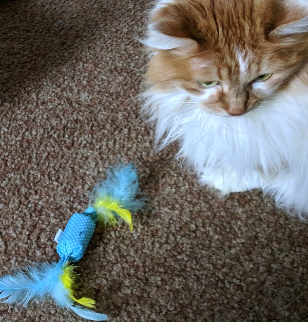 Cat playing with blue and yellow cat toy with feathers.