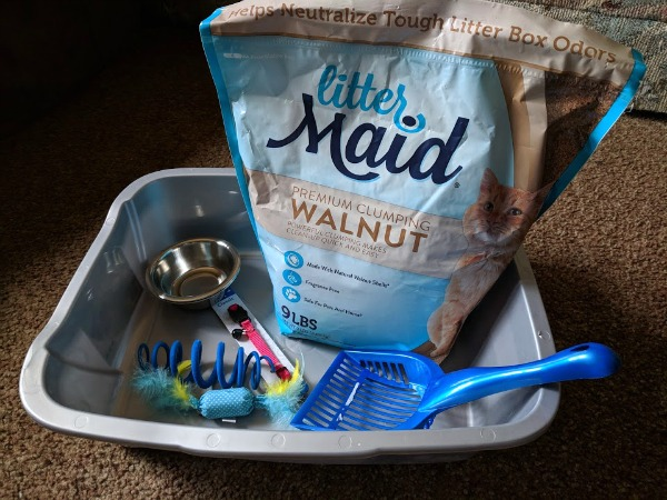 Items you need in a new cat welcome basket.