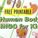 Grab our Human Body Printable Bingo Cards for fun-filled games your kids will love! Print these and check out our tips for how to use with your kids!