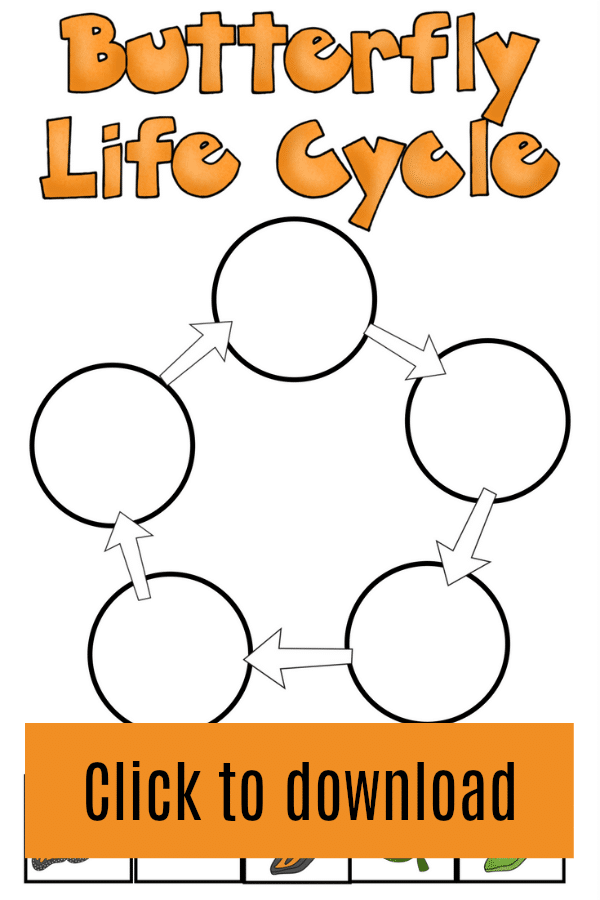 Printable butterfly life cycle worksheet for kids
