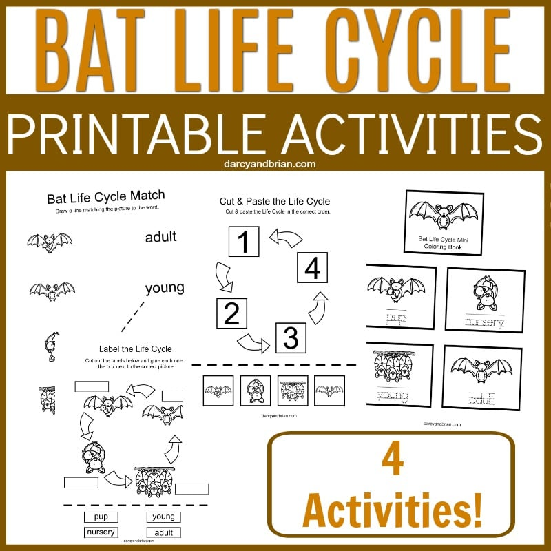 Collage of bat life cycle worksheets with text overlay.