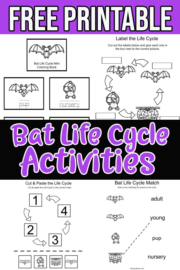 Preview images of bat life cycle printable activities.