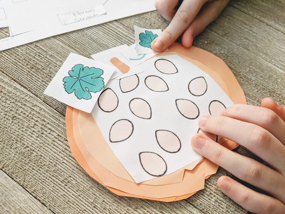 Close view of white child's hands gluing pieces of pumpkin together to build a paper pumpkin cross section.