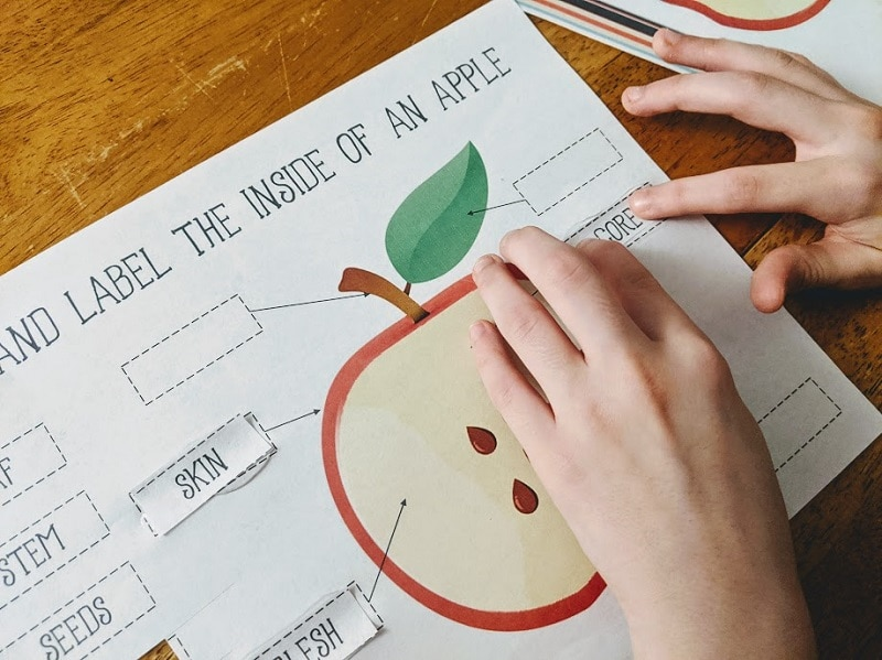 Close view of white girl's hands gluing down words to label apple parts on a worksheet.