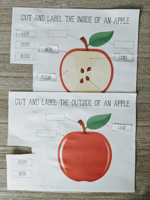 Two apple worksheets with some labels cut and pasted to identify parts. Papers laying on a gray wood background.