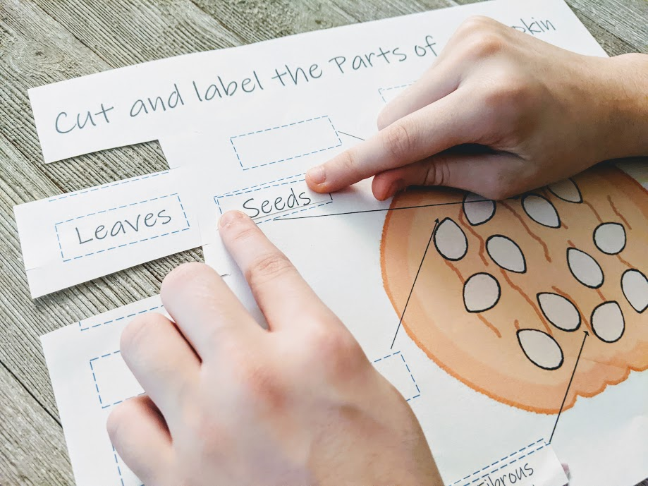Close view of white child's hands pasting seeds label on parts of pumpkin worksheet.