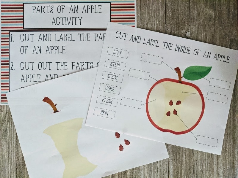 Three pages of printable apple activity on gray wood background. One page with instructions, one with stem, core and seeds, and the third with cross section for labeling parts.