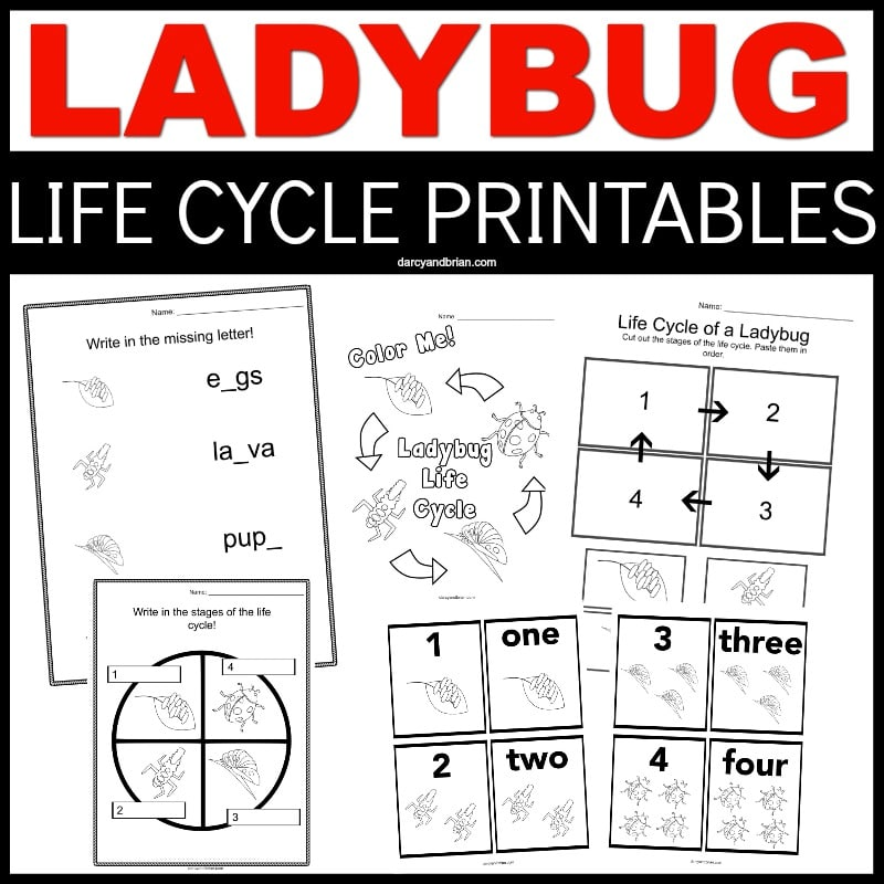 Ladybug in red text at the top with Life Cycle Printable in white text on a black rectangle. Collage of preview images of all the printable worksheets.