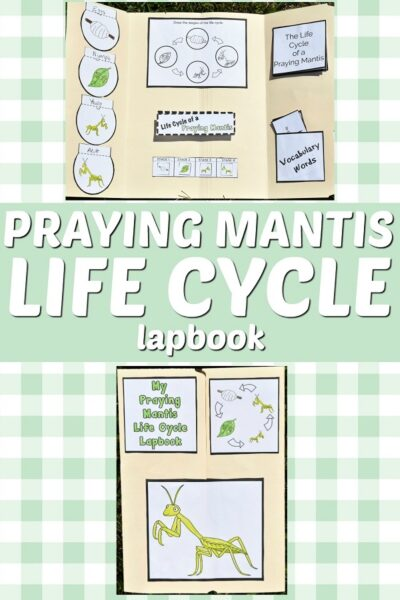 Top of image shows completed praying mantis life cycle lapbook open and another image of the front of the closed lapbook on a light green and white plaid background. White text on a light green background in the middle states Praying Mantis Life Cycle Lapbook.
