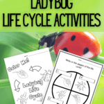 Black text on green background at top reads: Printable Ladybug Life Cycle Activities. Preview of two of the printable worksheets on a ladybug crawling on grass in background.