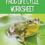 White text on dark green reads Printable Frog Life Cycle Worksheet. Below text is an image of a green adult frog on a lily pad in water.