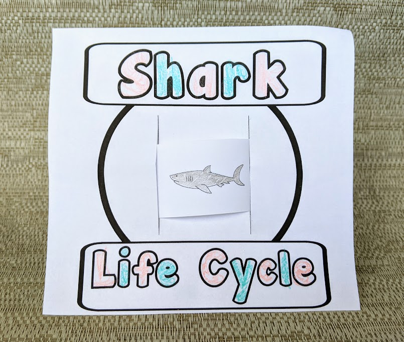 Shark life cycle activity cut out and assembled to slide through center. Sharks are colored gray and the works are colored in with pink and blue crayons.