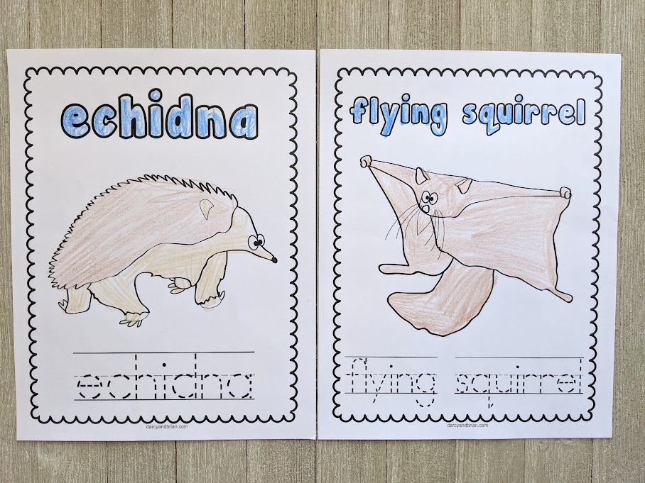 Printed out echidna and flying squirrel coloring sheets. The animal names and animals are colored in with crayon.