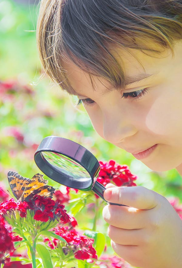 White child with short brown hair using magnifying glass to look at butterfly on flowers outside.