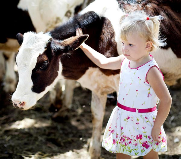 Black and white calf standing next to young white girl with blonde pigtails and wearing a white dress with flowers. The girl's right hand is placed on the calf. She has a serious look on her face.