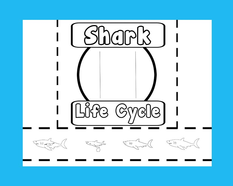 Preview image of shark life cycle slider printable on a bright blue background.