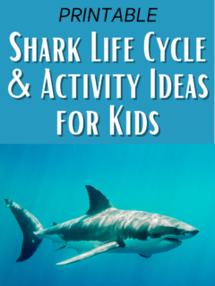 Black text at top says Printable. White text outlined in black on a blue background says Shark Life Cycle & Activity Ideas for Kids. Bottom half of image shows the side view of a shark swimming in water.