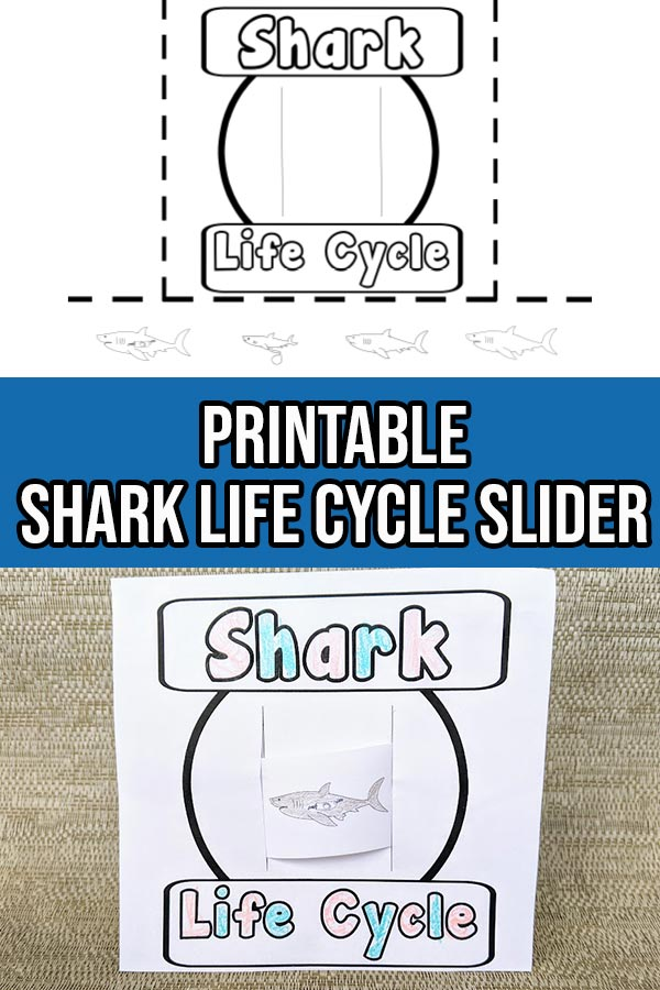 Black and white shark life cycle printable page at top and bottom half shows what it looks like when cut out, colored in and assembled. Middle between both images is a dark blue rectangle with white text that says Printable Shark Life Cycle Slider.